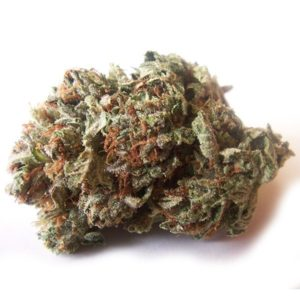 Master Kush strain for sale USA, Canada